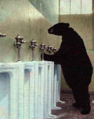 orso%20in%20bagno.png